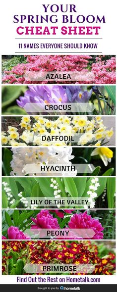 Get to know your spring flowers using this spring bloom cheat sheet from Hometalk. Learn the names of some of the most popular spring flowers and what they look like including azaleas, daffodils, peonies and more!