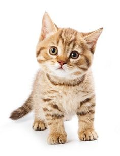 1000 images about healthy pets favourite cats on