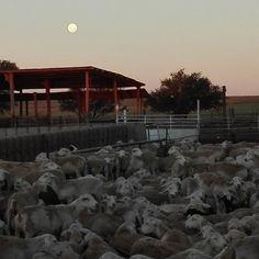 Full moon over the Van Zyl's Farm (congregation braai with @juan.marilynsolomons)