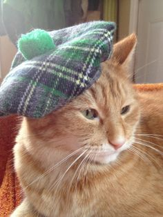 Cat Hat Irish Tam for St. Patrick's Day