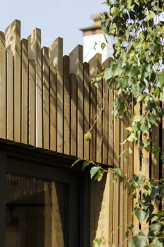A new build timber clad and light filled artist's studio nestles around an existing Silver Birch tree