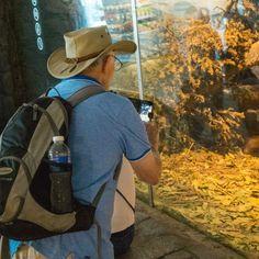 White hunter, Wolverine cage, Singapore Zoo