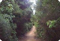 Guia de senderos de Tegueste