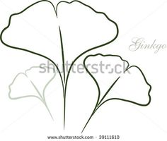 vector-ginkgo-leaf-sketch