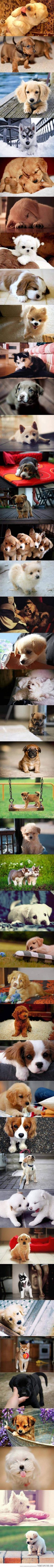 Yes, they grow up but hey! Enjoy!   Puppies!!!