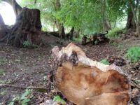 Vycházková trasa - Modrý Mlýn Firewood, Texture, Crafts, Surface Finish, Woodburning, Manualidades, Handmade Crafts, Craft, Arts And Crafts