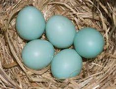 Image result for u.k glass egg light