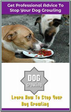basic dog training tips 3953138447 Dog Training Come, Basic Dog Training, Dog Growling, Medication For Dogs, Dog Pee, Dog Training Techniques, Dog Hacks, Dog Barking, Dog Owners