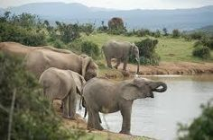 Petition · 80 elephants will be shot dead on September 7th · Change.org
