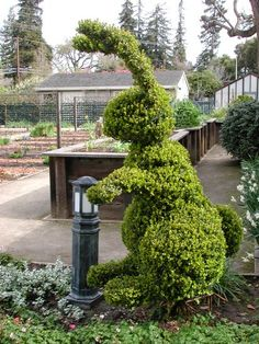 McGregor is in the garden again. Easter topiary Where do I hide? Topiary Garden, Garden Plants, Arte Floral, Garden Spaces, Hedges, Yard Art, Garden Inspiration, Botanical Gardens, Beautiful Gardens