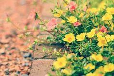 Professionally Design a Flower Bed - Garden Lovin
