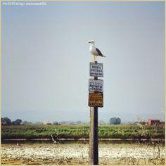 Controllando che tutto vada bene alla #RiservaNaturale delle #Saline di #cervia foto di @nimwen86