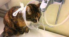 Após Operação Gato Descobre Nova Utilidade Para Funil Colocado No Seu Pescoço