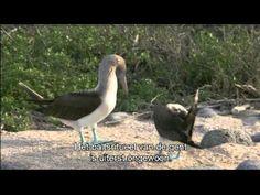 De Galapagos -eilanden in Ecuador -nederlands ondertitels