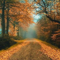 Autumn road (no location given) by Oer-Wout
