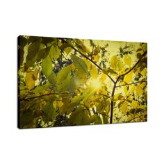 Aged Golden Leaves Canvas Botanical Wall Art and Limited Edition Fine Art by nature photographer Melissa Fague. Prints are available at: www.pipafineart.com Please follow us at: @pipafineart  #walldecor #wallhanging #homeaccessories #homedecore #wallart #photoprints #photoart #artwork #botanicalart #photography #nature #botanicaldecor  #wallartforsale #canvas #canvasart #canvasartwork #fineart #fineartphotography #photography #nature