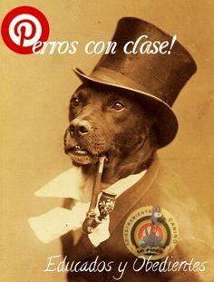 Perros con clase !! (educados y obedientes)