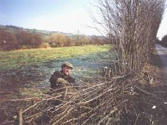 How to lay hedgerows.  The art of hedge laying is over two thousand years older than chain link.