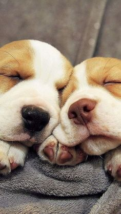 Loving snuggle!