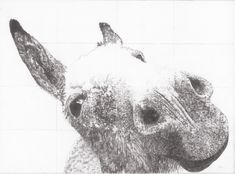 Donkey Drawing, Instagram Site, Large Artwork, Prints For Sale, Pencil Drawings, Printmaking, Wildlife, Horses, Abstract