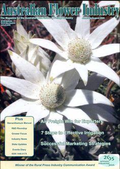 Issue 8 : flannel flower (Actinotus) Australian Wildflowers, Australian Flowers, Cut Flowers, Wild Flowers, Flannel Flower, Mosaic, Mosaics, Mosaic Art
