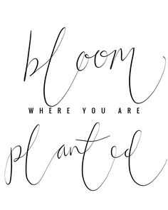"""Fate might shake us but our roots run deep. And we have love to water them. And so we bloom where we are planted. Turning our faces to the sun"" I am a little obsessed with this quote from Call the Midwife. Bloom where you are planted."