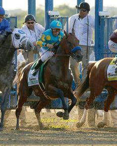 American Pharoah Kentucky Derby Start