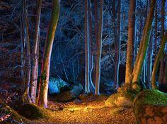 лес, осень, деревья, ночь, листья, природа, фото