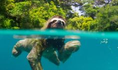From swimming sloths to lions in Botswana, this is Planet Earth II | Environment | The Guardian