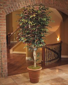 6' Trim Capensia Silk Tree 6 Ft. Tall