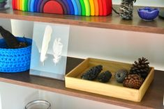 Love the feather display! What's on our Shelves (4 years) - Link Up