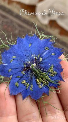 Moment magique où l'on découvre enfin les fleurs pressées ✨ Dried And Pressed Flowers, Dried Flowers, Moment, Flower Arrangements, Art Drawings, Diy, Plants, Dry Flowers, Herb Box