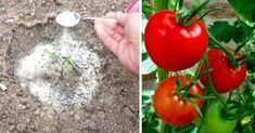 Nadchodzi wiosna! Czas sadzić warzywa, by móc się nimi cieszyć w upalne dni.