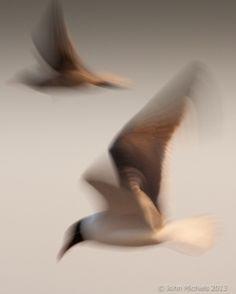 "thefullerview: "" TWO Birds Kiawah Island Area (by eiramis) """