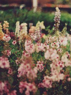Flowers in bloom - Inspired Design Mini Terrarium, Spring Flowers, Wild Flowers, Spring Wildflowers, My Flower, Beautiful Flowers, Colorful Roses, Planting Flowers, Flowers Garden