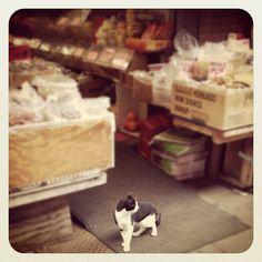 Shop kitten
