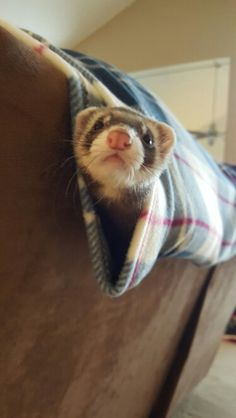 I guess I'll make my own hammock