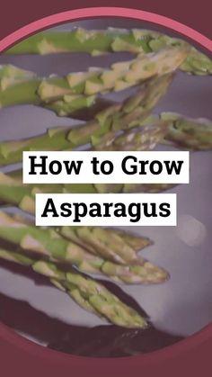 Regrow Vegetables, Planting Vegetables, Planting Seeds, Veggies, Asparagus Garden, Asparagus Plant, Vegetable Garden, Gardening For Beginners, Gardening Tips