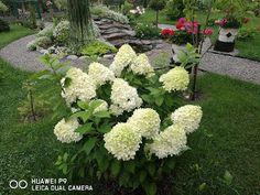 Garden, Plants, Gardens, Flowers, Balcony, Garten, Lawn And Garden, Plant, Gardening