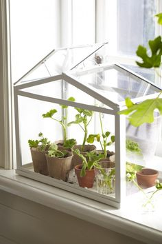 Bring your plants indoors when it gets cold and use a SOCKER greenhouse to keep your herbs all winter long. // I have no idea where we'd have room for this but I really like the idea (kitchen under side window??)