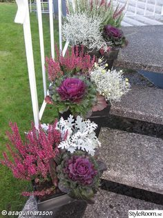 winter garden information Winter Planter, Fall Planters, Flower Planters, Container Flowers, Container Plants, Outside Fall Decorations, Fall Containers, Balcony Plants, Deco Floral