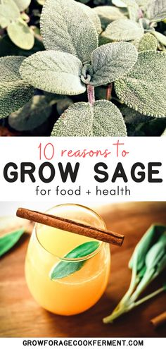 Here are 10 reasons why you should be growing sage in your garden this season for your health and for food! Sage is an awesome herb you should be growing for many reasons! Let's explore some of the many ways growing sage can be beneficial for your garden, your palate, and your health. Gardening For Beginners, Gardening Hacks, Indoor Gardening, Container Gardening, Hanging Herbs, Hanging Planters, Vertical Herb Gardens, Sage Plant, Herbs Indoors