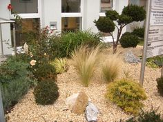 landscaping ideas for front yards for small yards