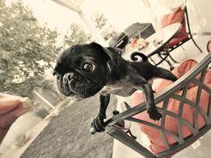 love this little doggie