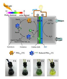 Biomass Fuel Cell Mechanism