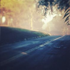 misty summer morning drives