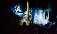 Foresta Lumina | Moment Factory | PROJECT