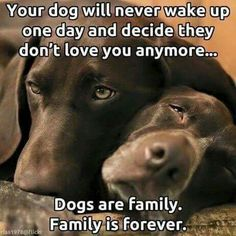 Always there, no matter what,,until their last breath. ❤️🐾