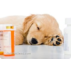 Medical insanity: Prozac prescriptions rise sharply in family pets