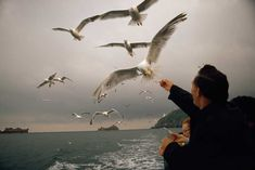 Gulls take food from travelers on a passenger boat off the Channel Islands, Great Britain, May 1971.Photograph by James L. Amos, National Geographic